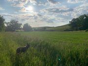 Gartengrundstück Stückle gesucht Ugrubach Abstatt