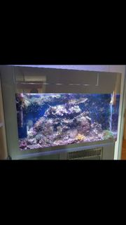 Meerwasseraquarium Acryl Schuran