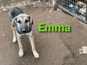 Welpe Emma 5 Monate alt