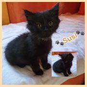 Wunderschönes Kitten Baby Katze Susi