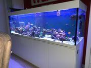 Meerwasseraquarium 200x60x60cm komplett mit Technik