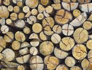 Brennholz Kaminholz Feuerholz - ofenfertig geschnitten