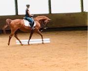Reitbeteiligung gesucht-Reiterin sucht Pferd