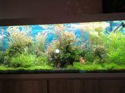 Aquarium Pflanzen und Fische