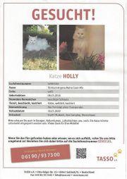 Unsere Holly wird sehr vermisst