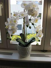 Orchidee -Deko