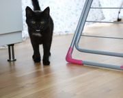 Katzenkind Fiene sucht wieder Schenkst