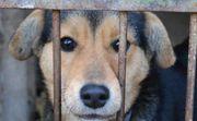Boromir ganz toller Hundemann ca