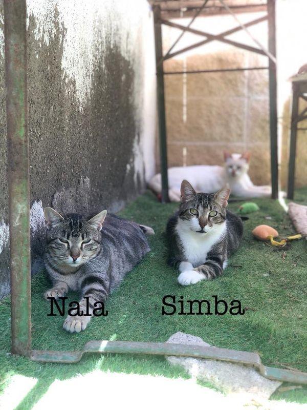 Nala und Simba - bald in
