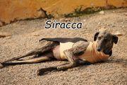 Darf Siracca bei Ihnen ihre