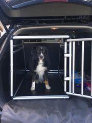 Hundebox Alu Transportbox Auto