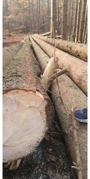 Brennholz -Stammholz