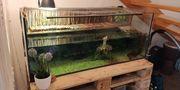 2 Wasserschildkröten Aqua-Terrarium mit Technik