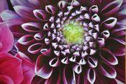 Bild - Blume