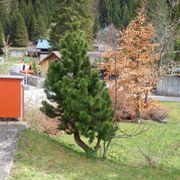 Verschiedene Bäume am 10 Mai