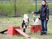 Willkommen in der Hundeschule Bennstedt