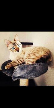 zwei gelungene Kitten in der