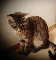 SOS NOTFALL Katze ducht DRINGEND