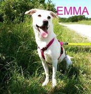 Emma- Zuhause gesucht