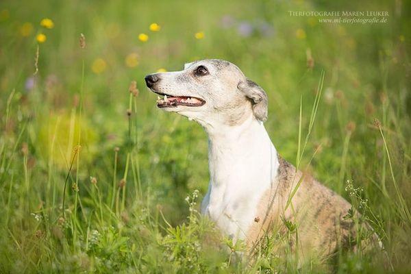 Liebevolle Hundebetreuung gesucht