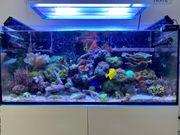Red Sea Reefer 350 inkl