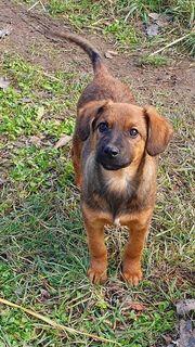 Pipa - wunderschönes Hundemädchen sucht ihre