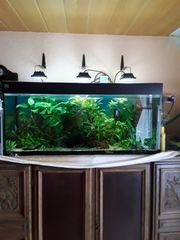 verkaufe 240l Juwel Aquarium komlett