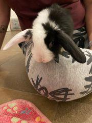 Kaninchenbabies Hasen Kaninchen