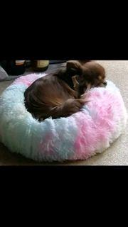 Hundebett Donut dog bed for