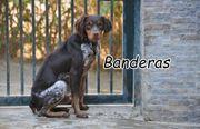Darf Banderas Ihr Herzenshund werden