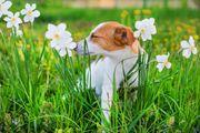 Hundebetreuung mit Familienanschluss auf Stunden-