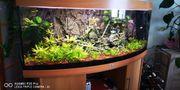 Juwel Panorama Aquarium