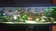 Aquarium 200x60x60cm