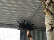 Europäisches Eichhörnchen Männchen 24 02