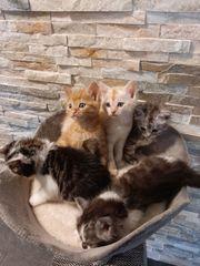 Nur noch ein Katzenbaby männlich