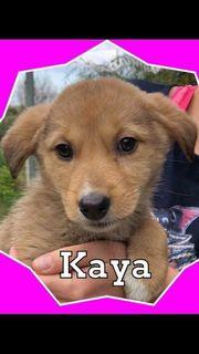 Kaya sucht ein Zuhause