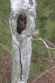 Baum-Verkehrssicherheit Baum-Kontrolle Baum-Gutachten