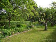 Pachtgarten in Apolda