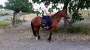 Welsh Pony Stute o P