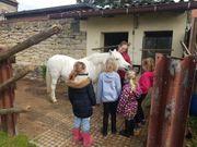 Erlebnis Pferd für die ganz