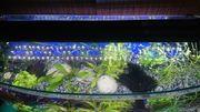 Aquarium 80x35x40cm mit Unterschrank