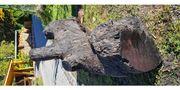 Mooreiche Baumstamm Edelholz Holz