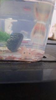 Axololotel Babys abzugeben