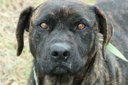 PIA - Listenhund Anl 1 - Sie