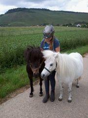 Reitbeteiligung für geführtes Ponyreiten für