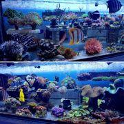 Meerwasser Korallen Fische Wirbellose Lebendgestein