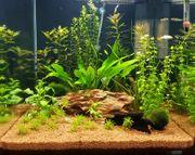 Dennerle Nano 60 L Aquarium