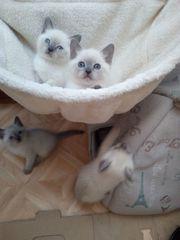 Katzen Babys männlich weiblich kitten