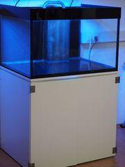 Hochwertiges Meerwasser Aquarium 350 Liter