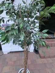 Kunstpflanze Ficus Benjamini